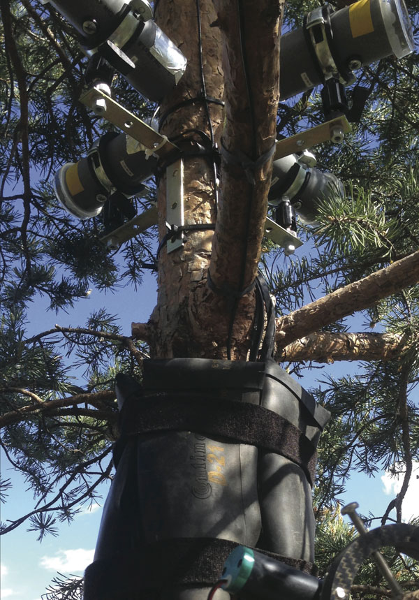 Phytoacoustics-–-Listening-To-Trees2